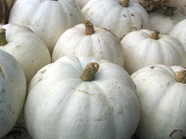 white-pumpkins-for-a-shabby-chic-look